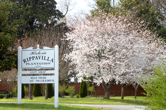 Welcome to the Historic Rippavilla Plantation — Established Circa 1852
