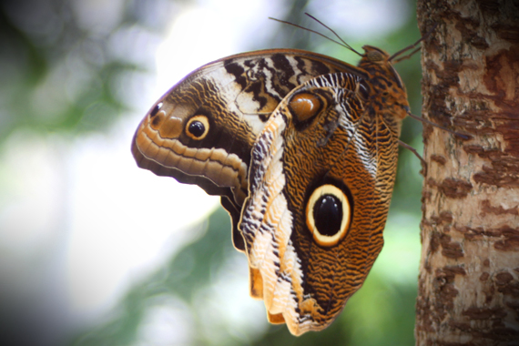 God's Design in These Wings is Positively Brilliant! See the Owl's Eye—Shadows, Glisten and All?