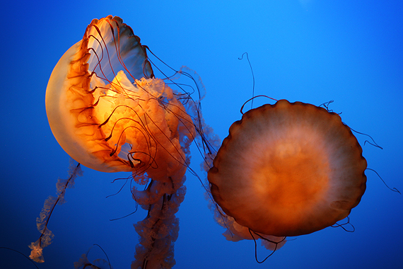 Some of the most unusual and beautiful creatures God designed