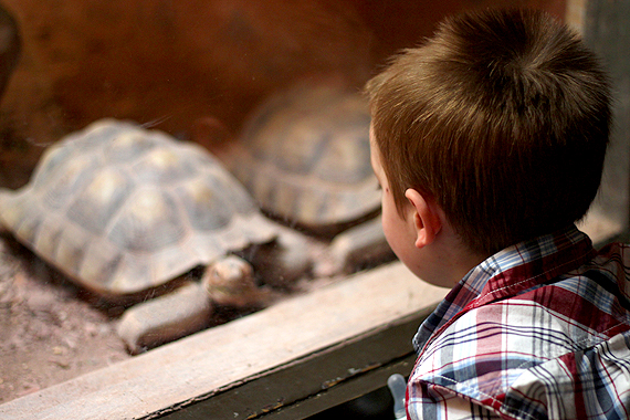 Strolling through the reptile exhibit—a pair of exotic turtles