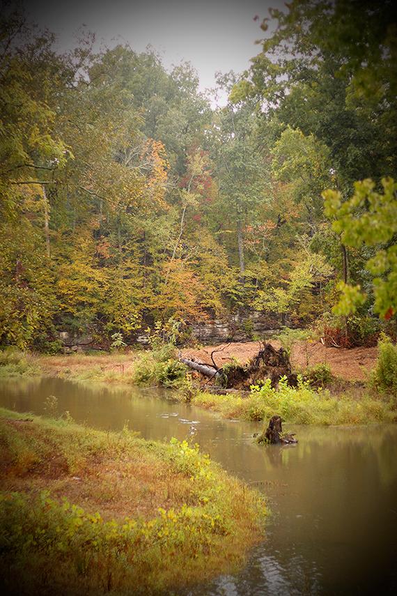 Beaverdam Creek in the Autumn