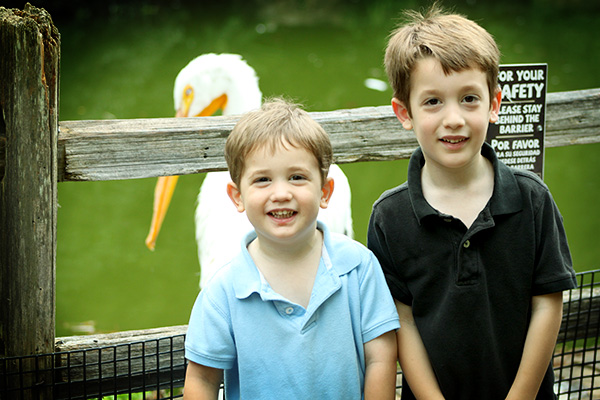 When Standing Upright, this Pelican Was Taller then the Boys!